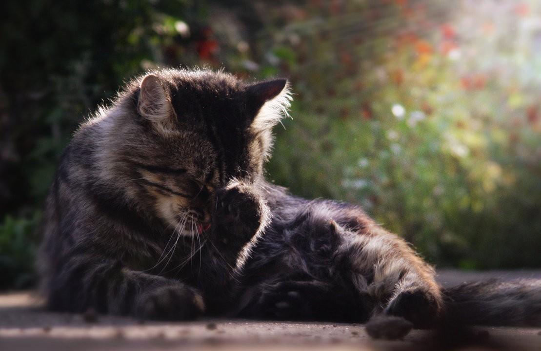 cat_facepalm_by_yurakaprosh-d5cx5e6.jpg