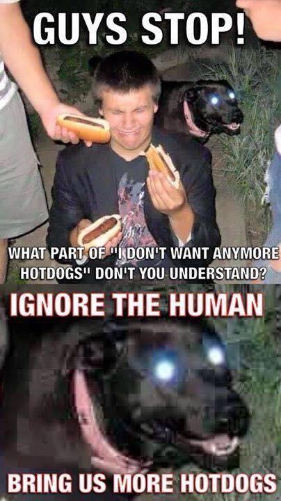 hotdogs and a dog.jpg