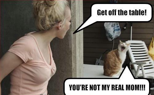 not_my_real_mom_cat.jpg