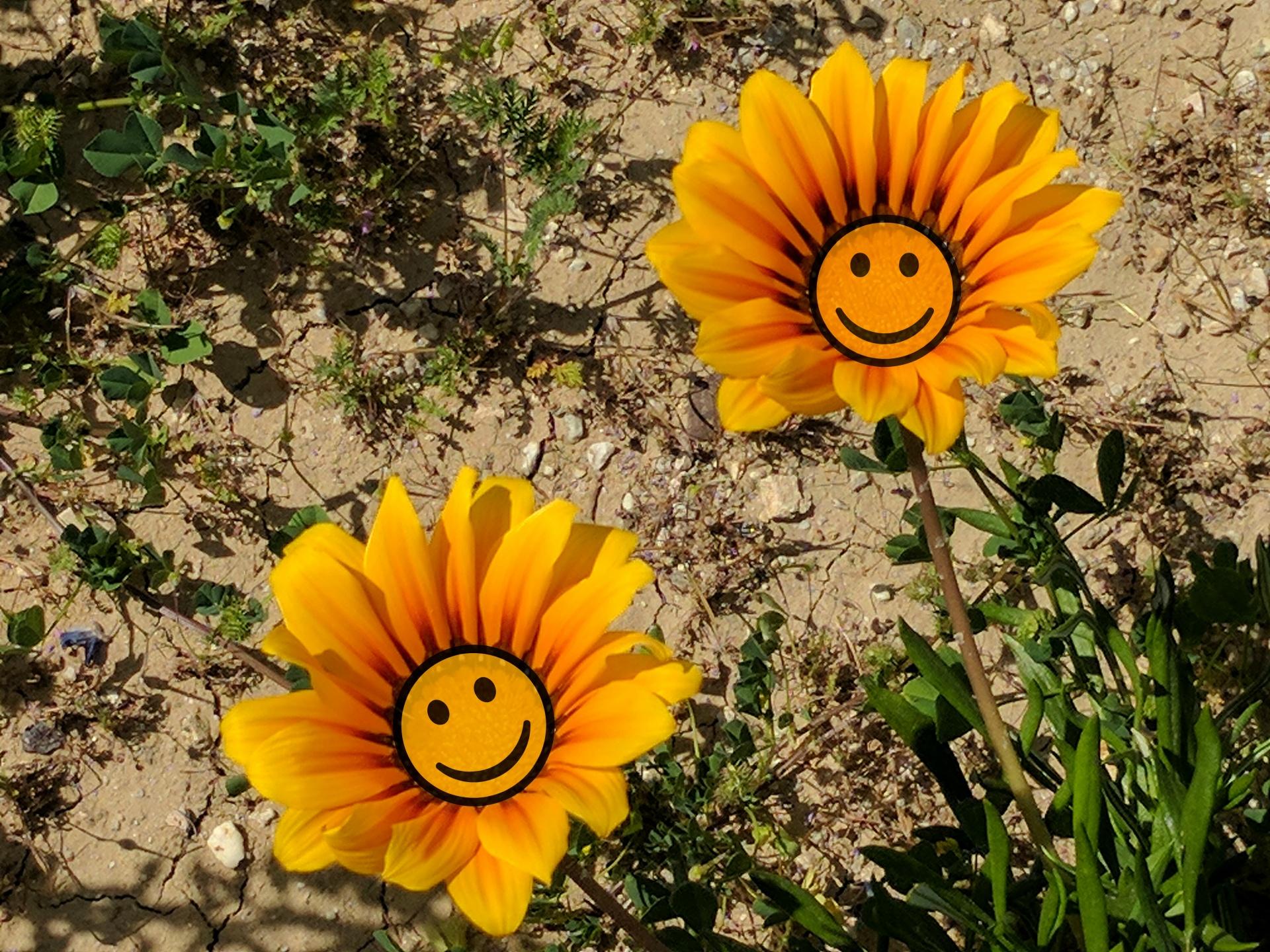 картинка улыбающегося цветка может