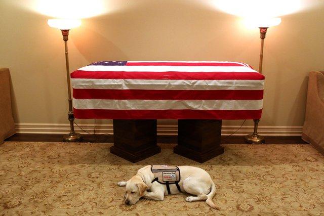 sully president bush service dog.jpg