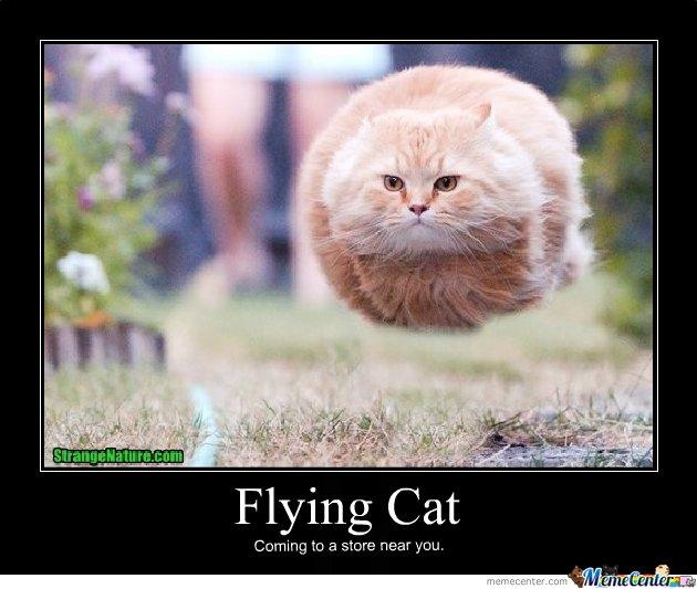 Flying-cat_o_119905.jpg