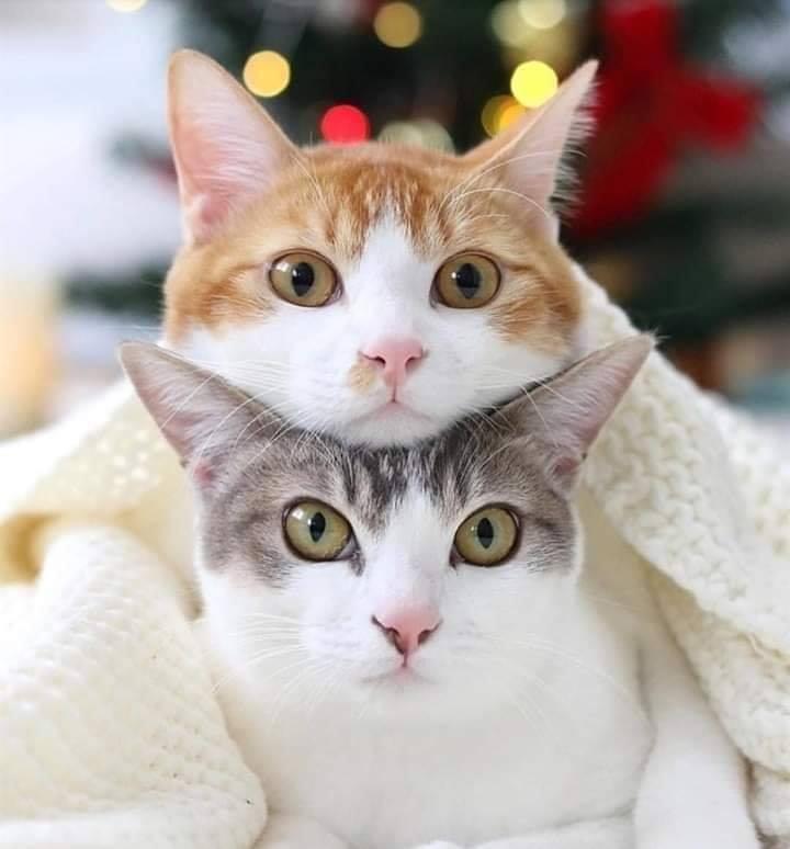 cattwins.jpg