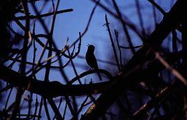 lonleybird.jpg