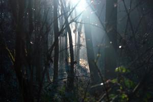 light.through.thicket.jpg