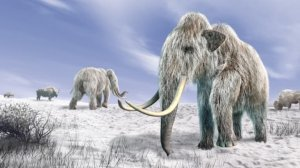 can-scientists-clone-a-woolly-mammoth-should-theys-featured-photo.jpg