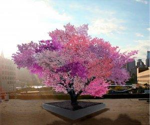 1_Tree-of-40-Fruit-PTP-Edition2.ngsversion.1518453014892.adapt.1900.1.jpg
