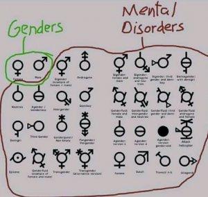 gender explained.jpg