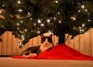 ChristmasItchy.jpg