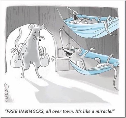 free hammocks.jpg